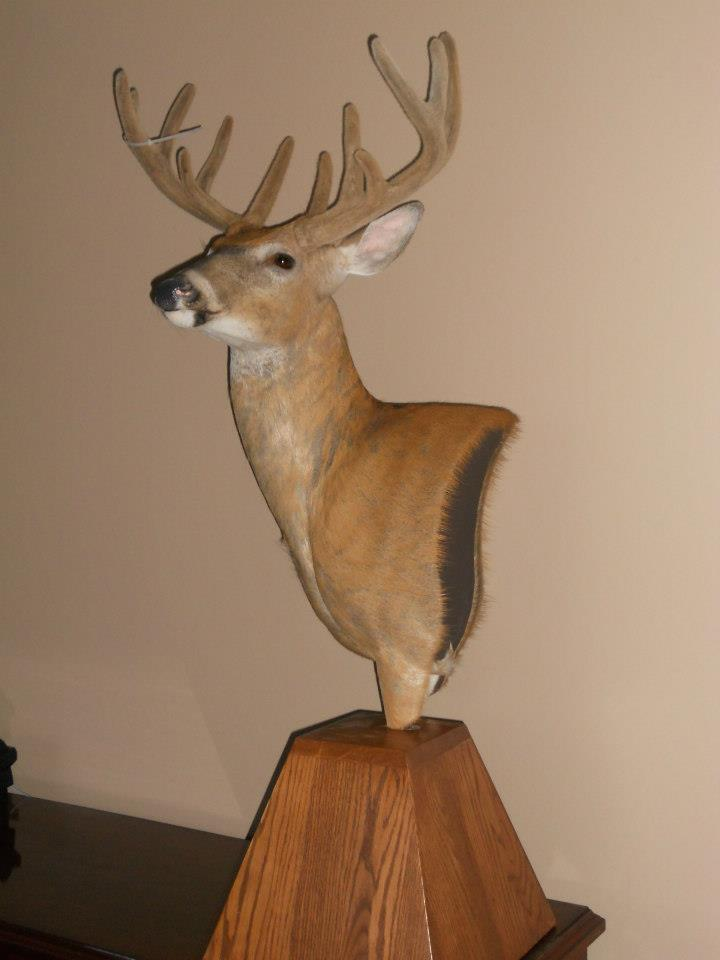 Northern Pines Taxidermy